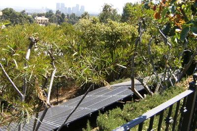 solar panel between trees