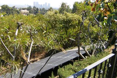 solar panel between trees
